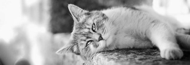 Na spełnienie marzenia czyli kota brytyjskiego. To coś o czym marzę od wielu lat,