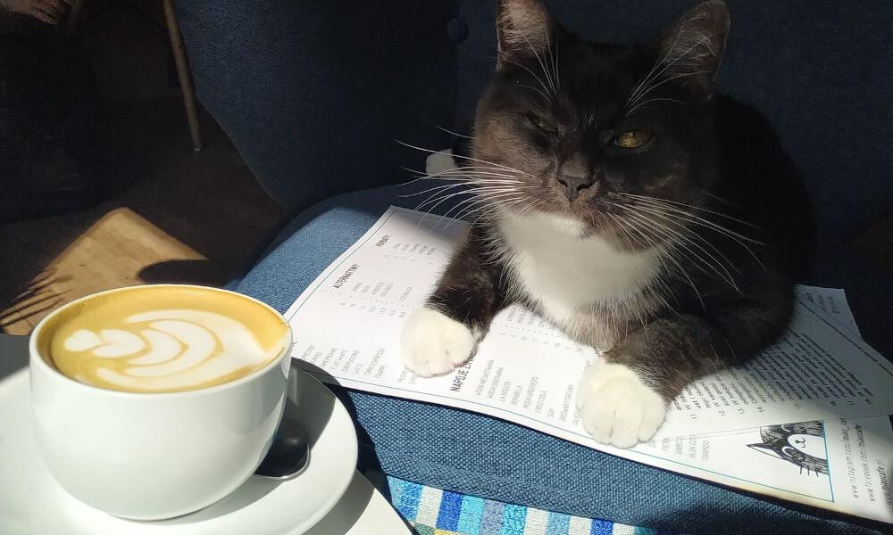 Miau Cafe - adres Naruszewicza 30 Warszawa - kot czarny