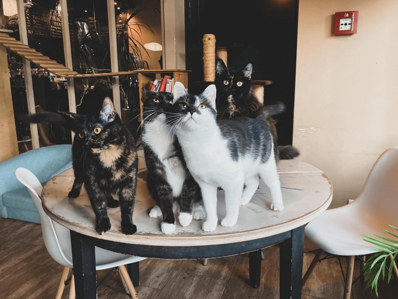 Miau Cafe - Koty na stole