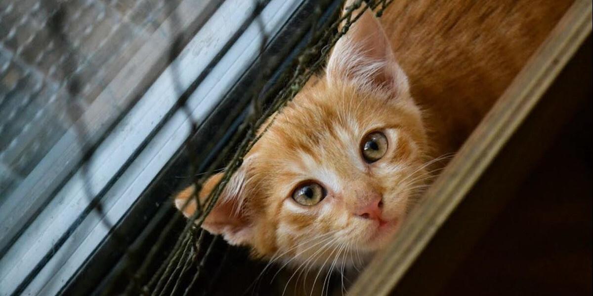Koci Rezydenci Miau Cafe!