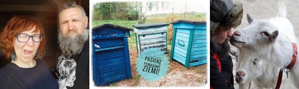 Pasieka na Polesiu