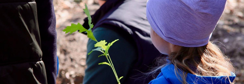 akcja sadzenia drzew - Zalesiacze III Edycja