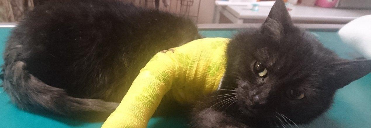 Rehabilitacja Sillii - zbiórka na leczenie kotki