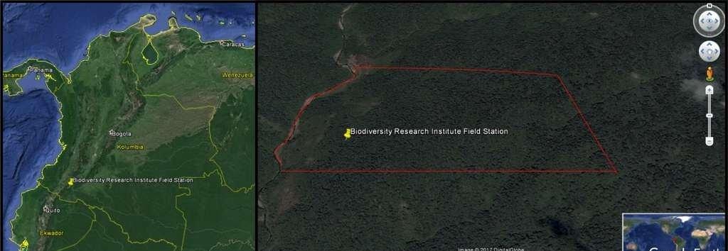 Utworzenie rezerwatu przyrody - las tropikalny w Kolumbii