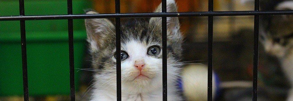 Pomagamy fundacyjnym kotom - zbiórka na kociarnię