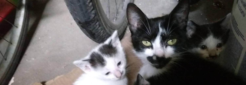 Zbiórka na leczenie dla 4 kotów