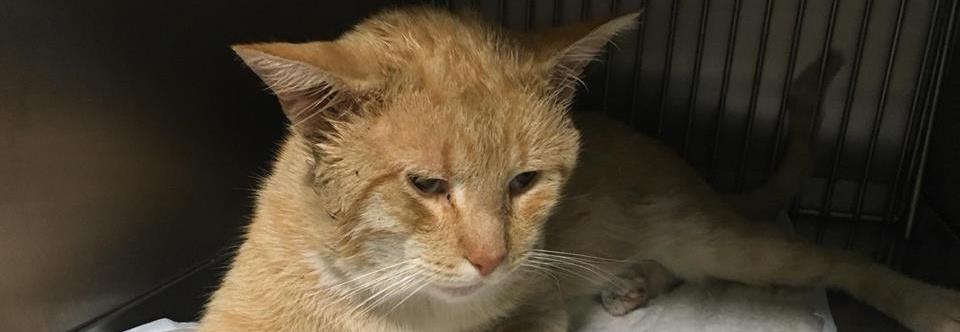 Zbieramy pieniądzę na leczenie wolnożyjących kotów, opłacenie faktur, karmę i żwirek do DT