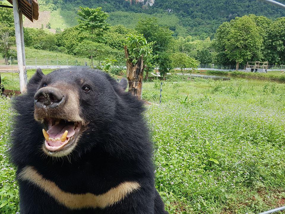 Podziękowanie elektroniczne ze zdjęciem niedźwiedzia
