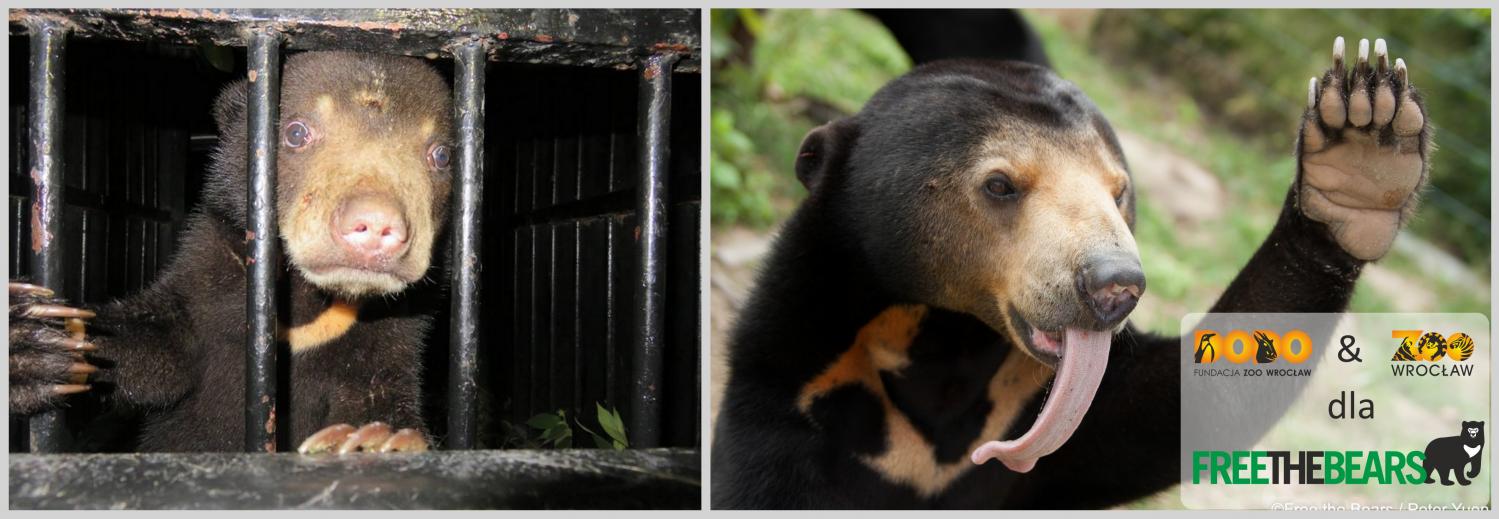 Fundacja Zoo Wrocław DODO ratuje niedźwiedzie w Laosie
