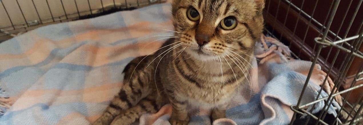 Pomóż kotce po wypadku w zakupie wózka i karmy...