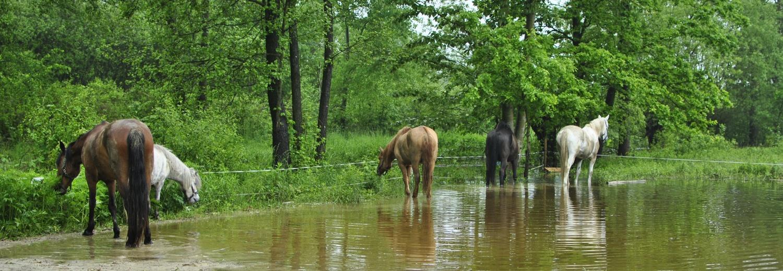 Stajnia Alado - pomoc przy skutkach powodzi