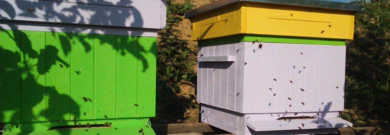 Nowe domy dla pszczół.