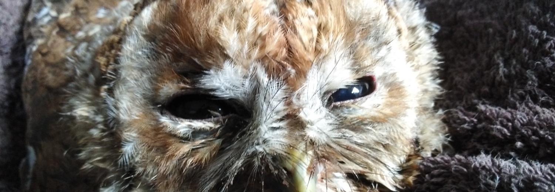 Leczenie i rehabilitacja dzikich zwierząt w Sowim Dworze