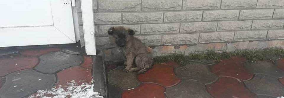 Ratunek dla psów na Ukrainie. Na ogrzewane pomieszczenie dla najbardziej chorych!