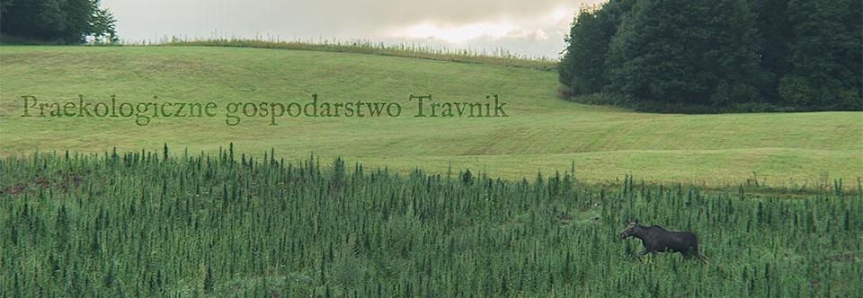 Praekologiczne gospodarstwo Travnik - sezon 2