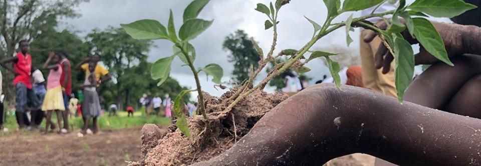 Zasadźmy rekordową liczbę drzew w Gambii! Pomóż społeczności w walce ze zmianami klimatu