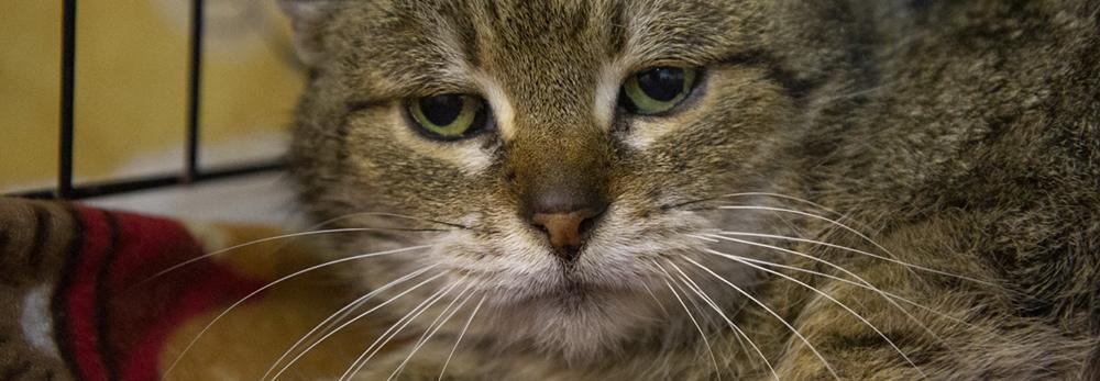 Utrzymanie Sosnośląskich kotów do adopcji w kwietniu