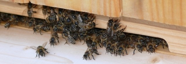 Pracownia pszczelarska