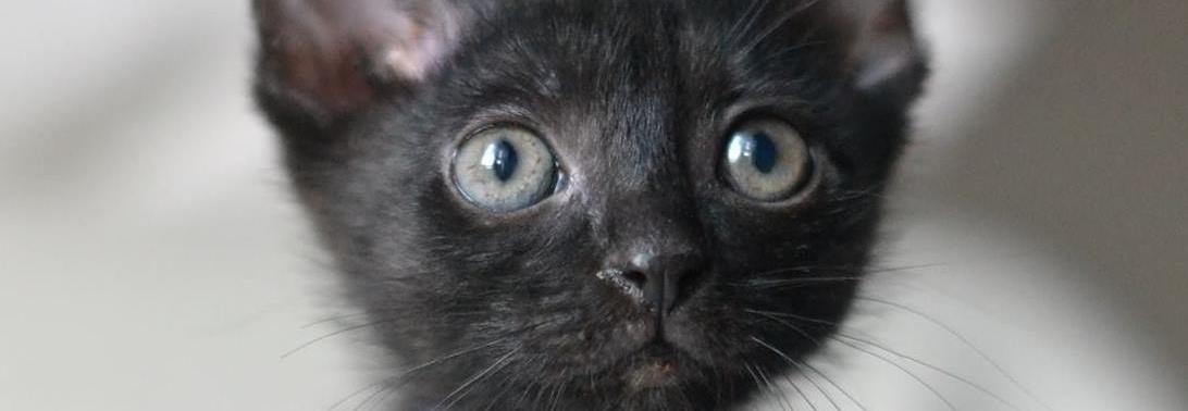 Koty Pokochaj i Przygarnij
