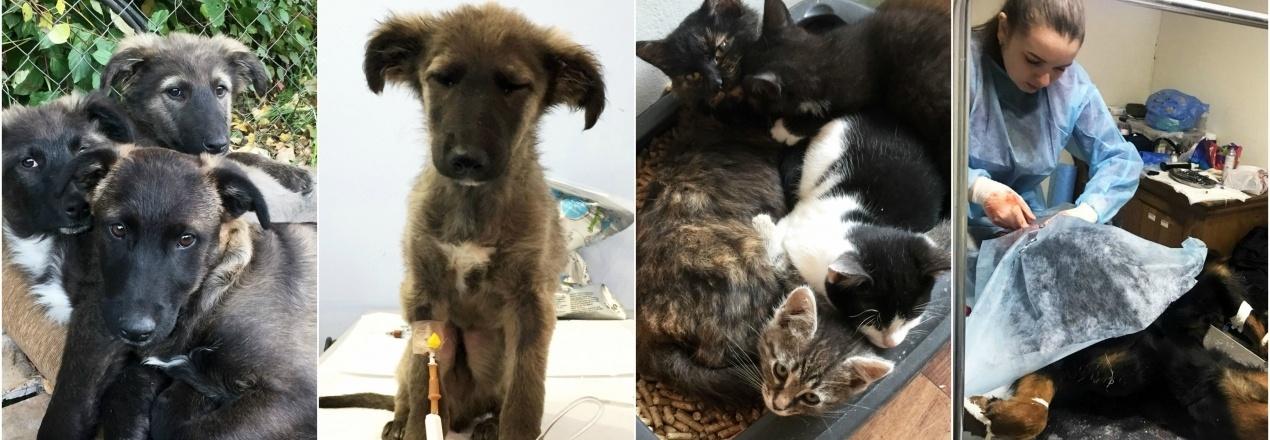 Pomoc dla zwierząt na Ukrainie