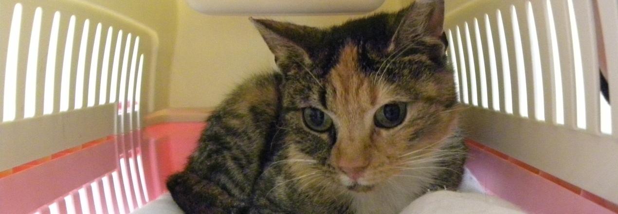 Leczenie kotki Lulu - prosimy o pomoc!