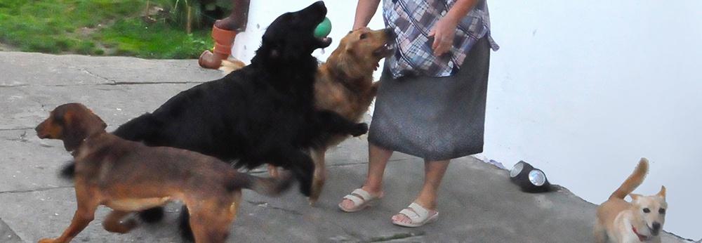 Ogrodzenie terenu dla psów