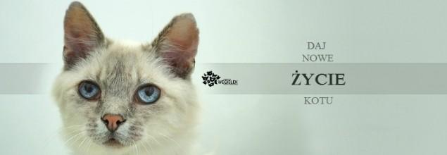 pokrycie faktury za leczenie kotów