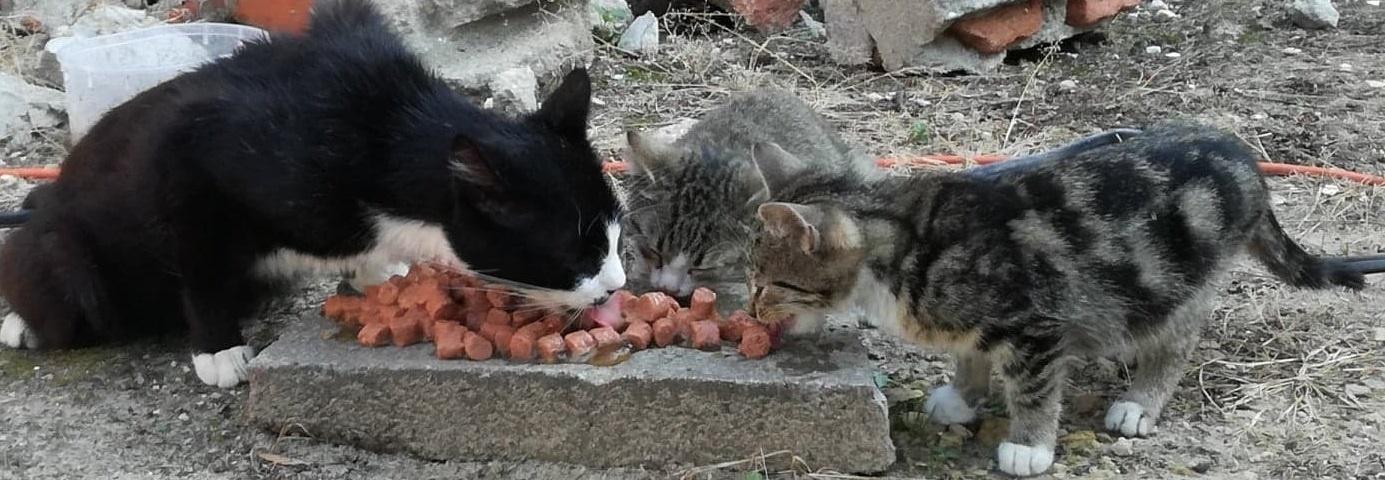 bezdomne małe kotki