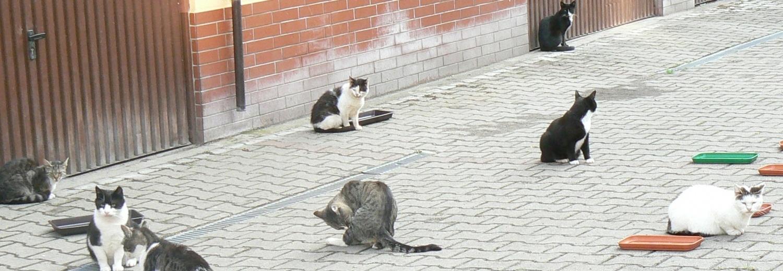 30 kotów z Trzebiatowa pod opieką Pana Franciszka