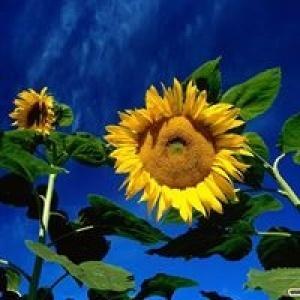 Urszula Kwiatek-Daniluk